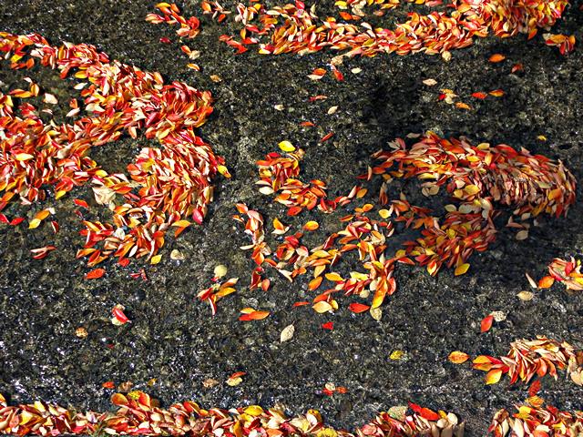 王竜寺川の落ち葉