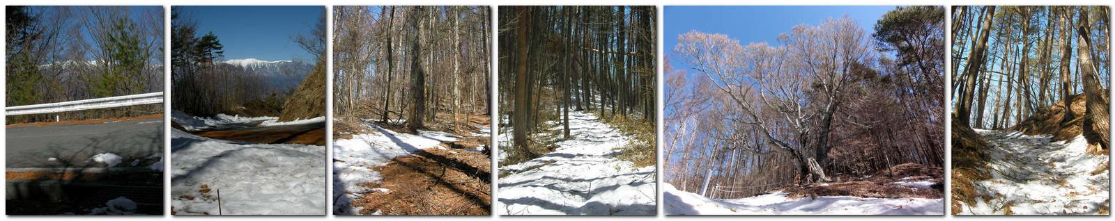 2014年3月15日「陣馬形山登山道と丸尾のブナ(樹齢600年)」