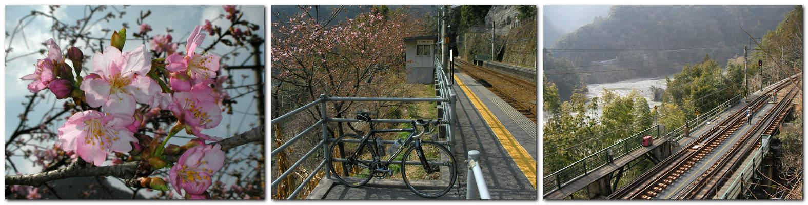 2014年3月19日「JR飯田線伊那小沢駅の寒桜(天龍村)」